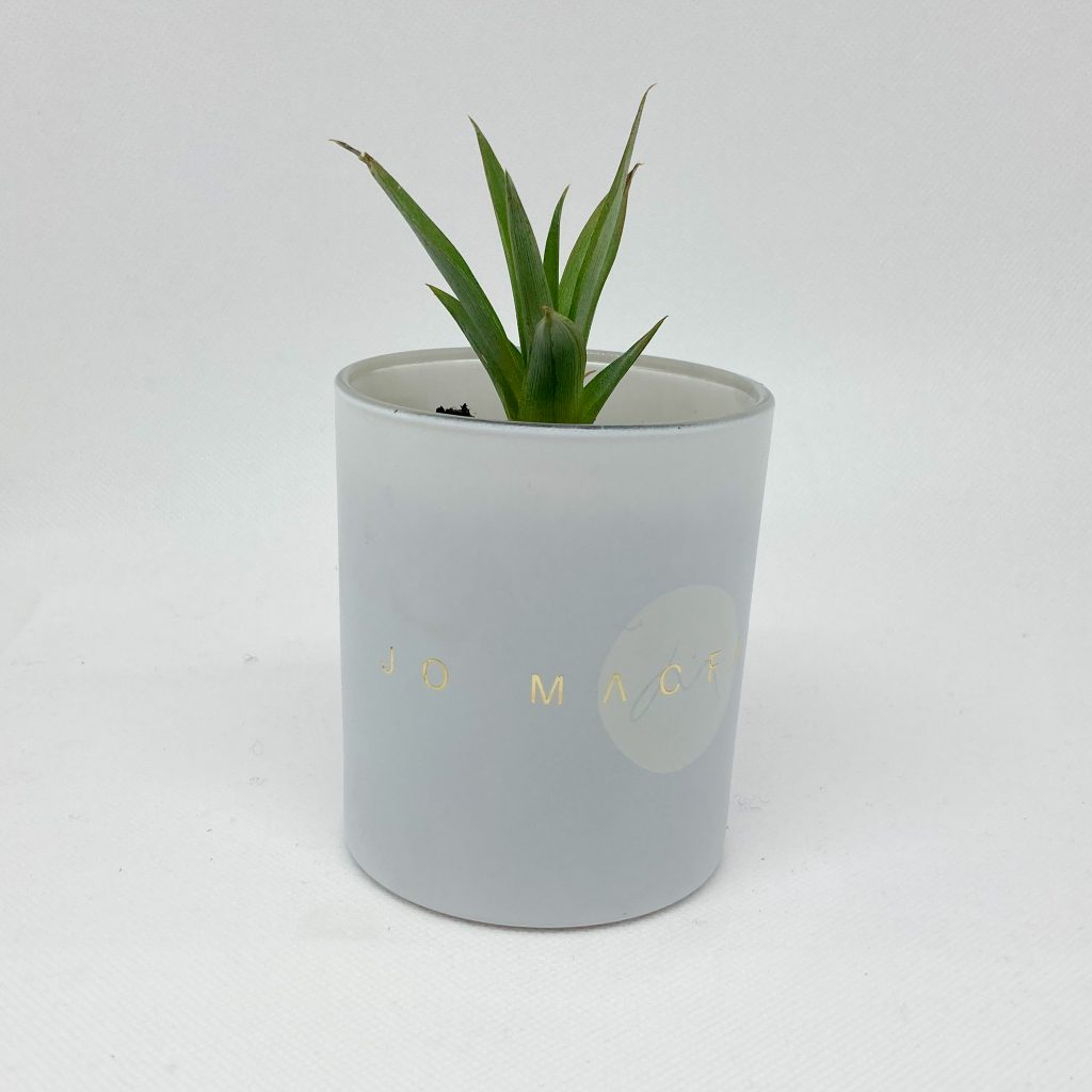 repurposed candle jar with plant