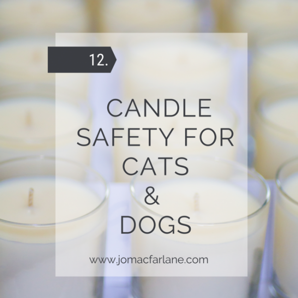 blog 12 - Candle safety for cats and dogs